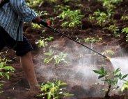 L'Etat publie la liste de pesticides susceptibles de contenir des perturbateurs endocriniens