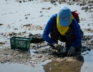 Moules, coques, palourdes : avant d'en ramasser, partez à la pêche aux infos