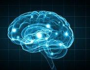 Neurologie : le cerveau des femmes plus actif ?