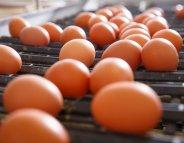 Œufs contaminés : des gaufres retirées du marché