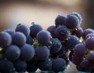 Menus santé : le raisin, le petit grain qui fait du bien