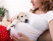 Préparez votre animal à l'arrivée de bébé