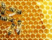 75% des miels contaminés par des pesticides