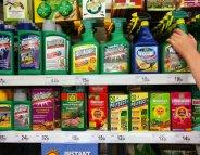 Glyphosate : les taux dans les urines augmentent au fil du temps
