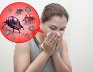 Allergie aux acariens : un réel handicap au quotidien