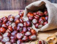 Menus santé : la châtaigne, de la cueillette aux fourneaux