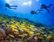 La plongée sous-marine pour soigner les victimes d'attentats?