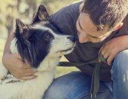 Psychologie animale : les chiens influencés par le regard humain