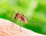Un nouvel espoir dans la lutte contre le paludisme