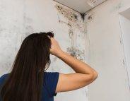 Moisissures : un logement sur cinq touché en France !