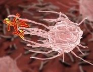 Contre la tuberculose, la piste de la vitamine C se confirme