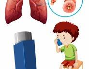 Asthme : le mécanisme d'attaque des allergènes