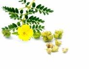 Une libido stimulée grâce aux plantes ?