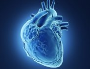 Peut-on avoir le cœur à droite ?