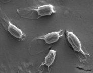 Infections nosocomiales : une nouvelle bactérie responsable