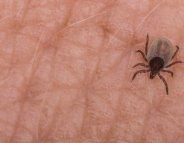 Maladie de Lyme : 1 Français sur 3 n'en a jamais entendu parler !