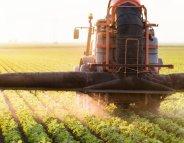 Les pesticides diminuent l'efficacité des chimiothérapies