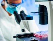 [Vidéo] Les cellules souches : essentielles pour la recherche