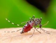 Dengue : plus de 5 000 cas à la Réunion depuis le 1er janvier 2018