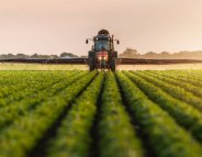 Pesticides : l'utilisation du metam sodium suspendu pour 3 mois