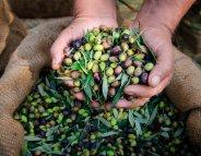 Menus santé : l'olive, la reine des antioxydants