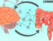 Régulateur de l'appétit : ventre versus cerveau ?