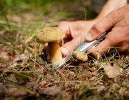 Champignons : comment éviter les intoxications ?
