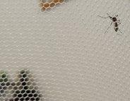 La lutte contre le paludisme en mal de financement