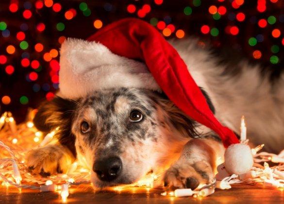 A Noël, les animaux ne sont pas à la fête