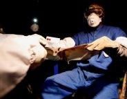 Ebola : les chauves-souris, probables réservoirs du virus