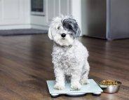 Votre animal de compagnie est-il en surpoids ?