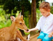 Bactéries antibiorésistantes : dangereux de caresser les animaux au zoo ?