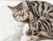 Allergies : les animaux aussi