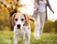 Pour la santé de votre cœur, adoptez un chien !