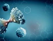 Cancer : des cellules cannibales résistent à la chimiothérapie
