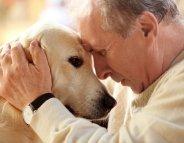 Pour vivre plus longtemps, adoptez un chien