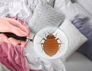 Comment vous débarrasser de punaises de lit ?