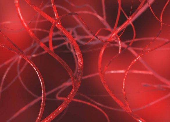 Des vaisseaux sanguins des femmes plus fragiles que ceux des hommes ?