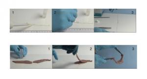 La texture à base de nanoparticules de silice permet une adhésion en quelques secondes entre deux morceaux de foie. ©Laboratoire MMC-CNRS/ESPCI