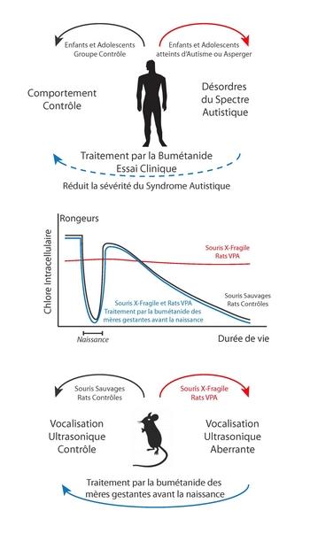 http://destinationsante.com/wp-content/uploads/2014/02/Cartoon_Science_AutismPaper.jpg