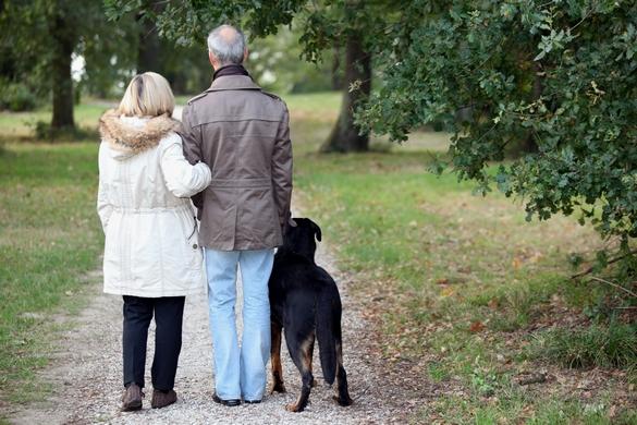 Comme chez l'homme, le vieillissement de votre chien s'accompagne de modifications physiques et de comportement. ©Phovoir