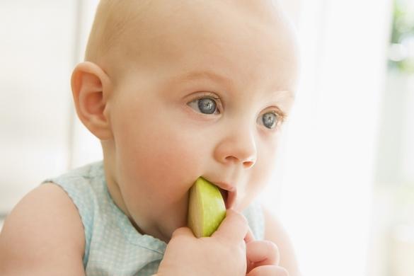 Ne lui donnez pas trop précocement des aliments solides. ©Phovoir