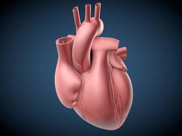 Un test sanguin pourrait bientôt permettre de suivre l'évolution de la greffe chez les transplantés cardiaques. © C. Bickel/Science Translational Medicine