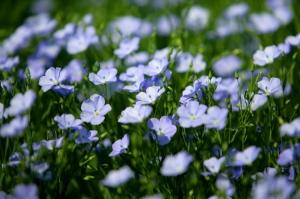 Attention les allergies aux pollens ne sévissent pas uniquement au printemps ©Phovoir