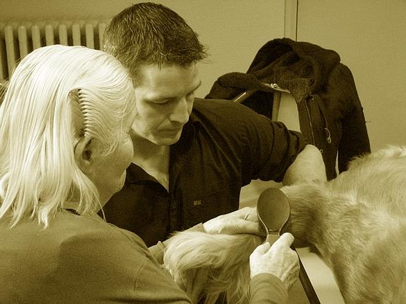 L'animal sollicite les capacités cognitive, motrice et affective des personnes âgées. ©Destination Santé