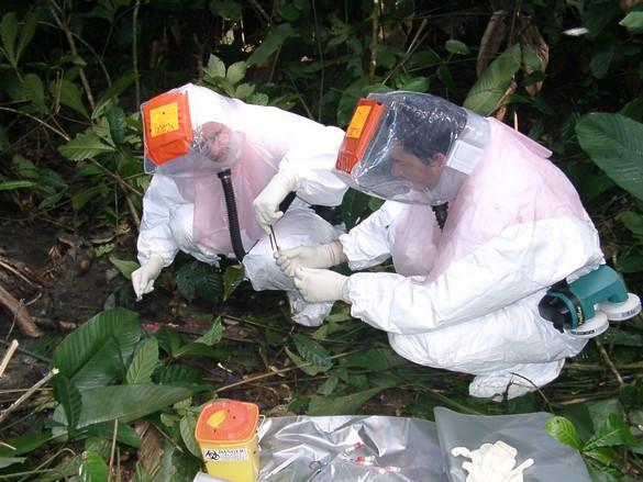 L'analyse du virus a montré que le foyer congolais est dû à une souche locale. ©Pierre Rouquet