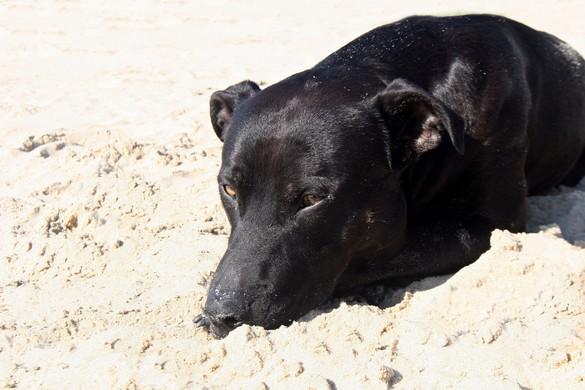 Evitez de sortir votre animal aux heures les plus chaudes de la journée. ©Phovoir