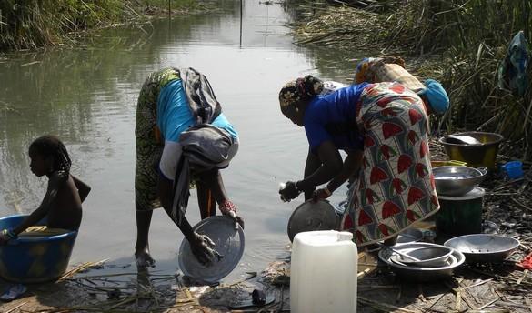 Introduire des langoustines dans les rivières pour lutter contre la deuxième parasitose mondiale. ©Institut Pasteur Lille