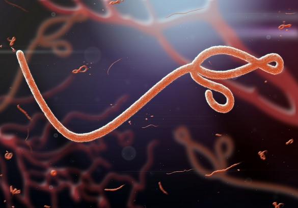 Vue microscopique du virus Ebola - jaddingt/shutterstock.com