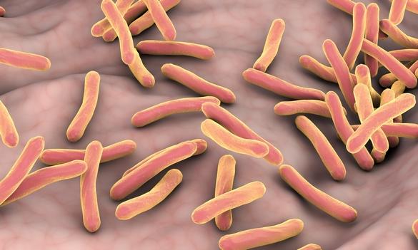 Vue microscopique de Mycobacterium tuberculosis. Kateryna Kon/shutterstock.com